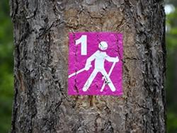 Nordic-Walking-Kurse
