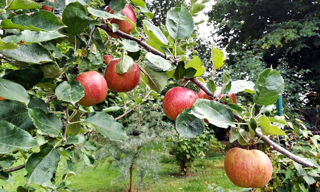 Herbstliche apfel rezepte
